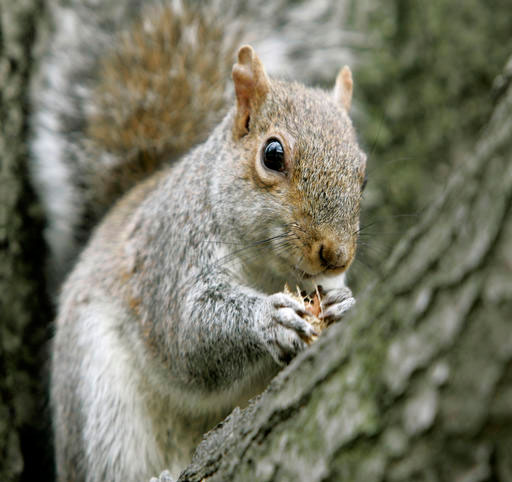 time to plant spring bulbs and ward off evil squirrels