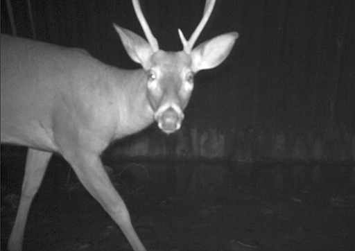 'Crittercams' show how animals avoid crossing the highway
