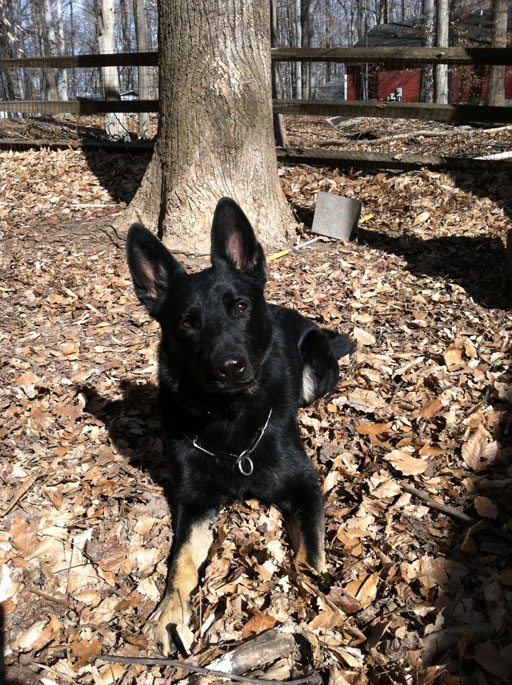 Missing search and rescue dog found