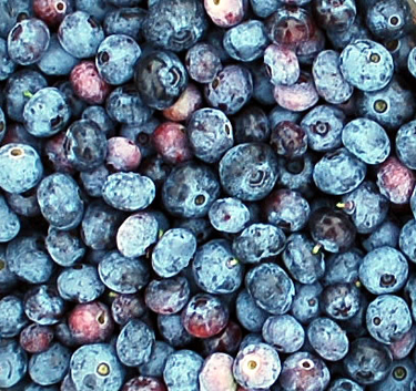 Blueberries may ward off Type 2 diabetes