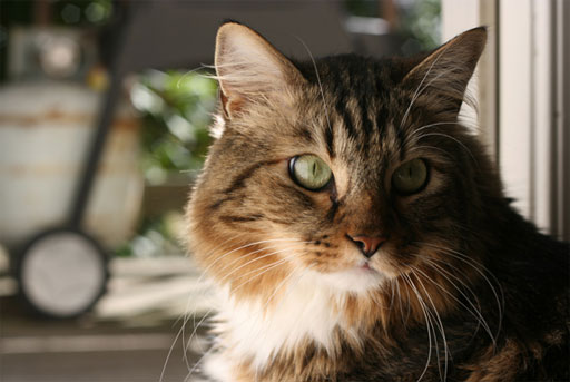 Feline candidate enters Virginia race for U.S. Senate (VIDEO)