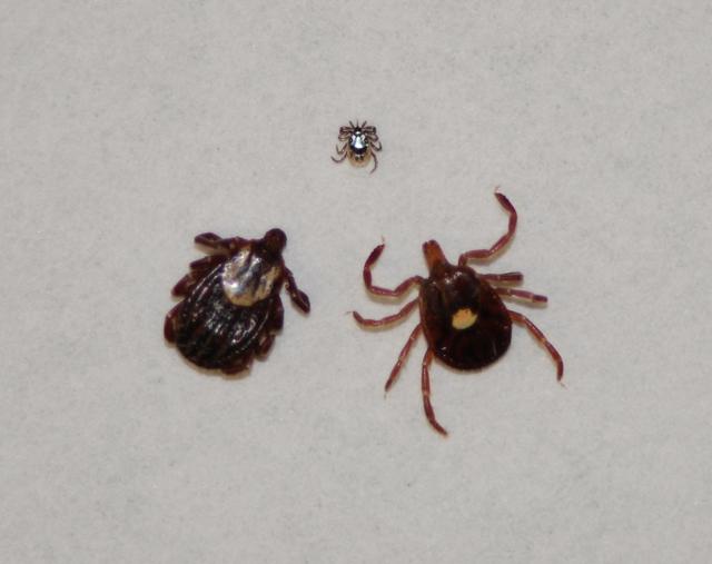 When ticks attack! Tips for avoiding Lyme disease