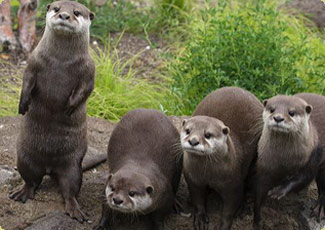 Two new otters die at the National Zoo