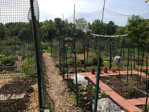 Community garden buzzing with new beehive