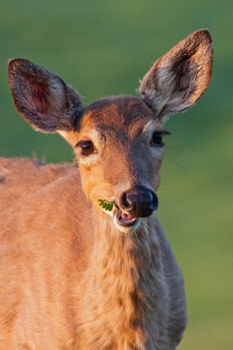 November is prime deer-crash season