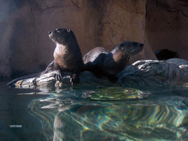 See cool sea creatures at Calvert Marine Museum
