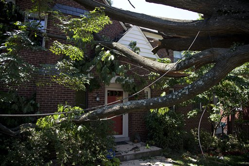 Tree removal tips and contact information