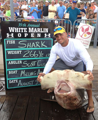 N j man lands record hammerhead off ocean city video wtop for Shark fishing nj
