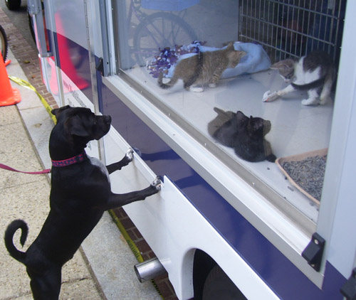 Dog walk raises funds, awareness for at-risk animals