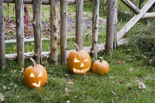 Tips to keep squirrels from destroying pumpkins