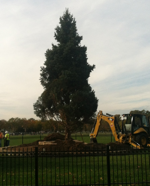 National Christmas Tree planted days before massive storm