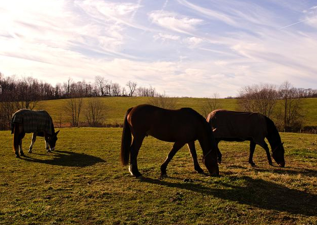 New study suggests creation of horse-park cooperative