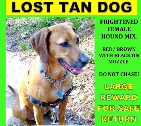 Community searches for lost dog in Md.