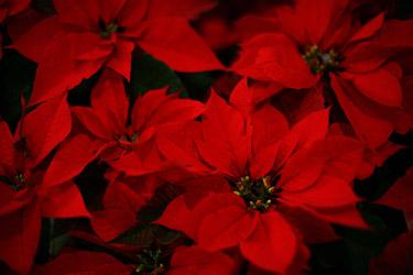 Garden Plot: Holiday plant protection and garden-lover gift ideas