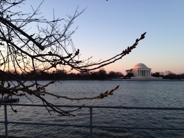 What are the peak bloom dates for D.C.'s cherry trees?