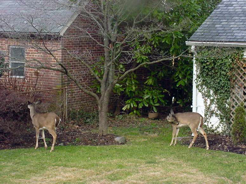 Garden Plot: Keeping Deer Away From Young Trees | WTOP