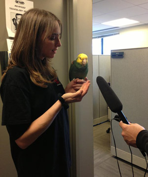 Echo the parrot stops by WTOP for an interview