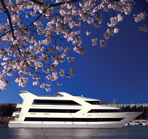 National Cherry Blossom Festival specials