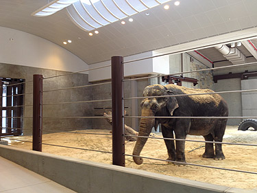 D.C. zoo opening elephant center after $56M overhaul