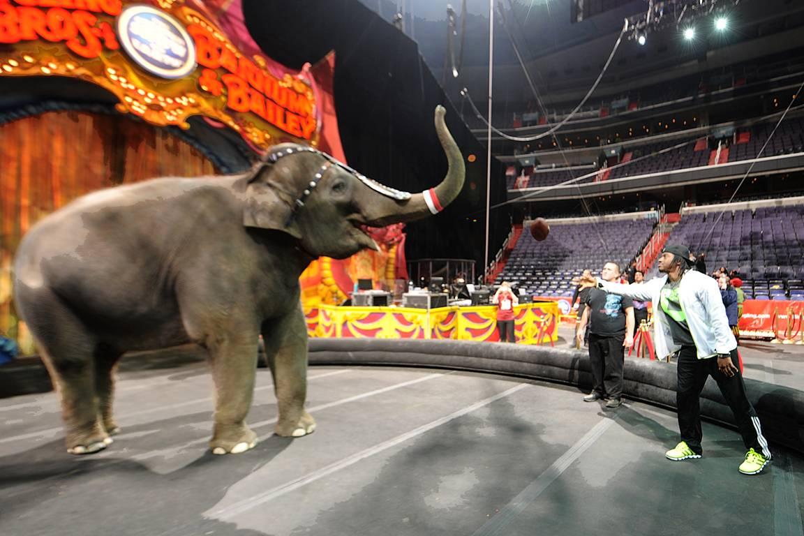 Robert Griffin III visits the circus, plays with elephants