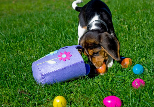 Keep pets safe on Easter: Hide the chocolate and count your eggs