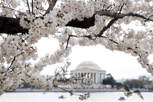 Parking options for 2017 National Cherry Blossom Festival