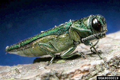 Bugs: This year's good and bad news (VIDEO)