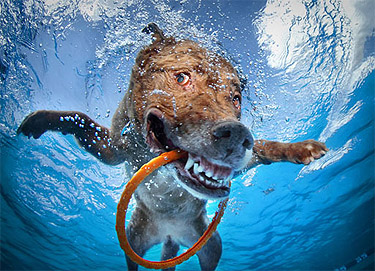 How to tell if Fido is the next Michael Phelps