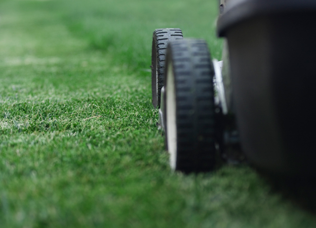 Garden Plot: The golden rules of lawn care