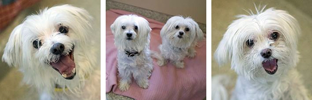 Pet of the Week: Blanche and Big Daddy