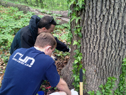 Volunteers go to war against Rock Creek Park invader
