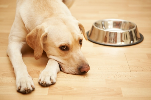 Dr. Pawz: Katy's 10 tips for choosing the right pet food, Part 2