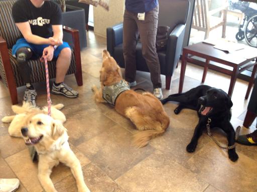 A Hero's Best Friend: Dogs help wounded warriors recover