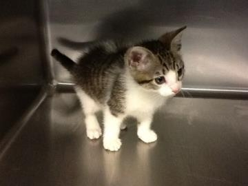 Woman charged in kitten theft; kitten adopted