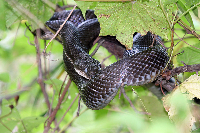Snakes in the trees at D.C. park