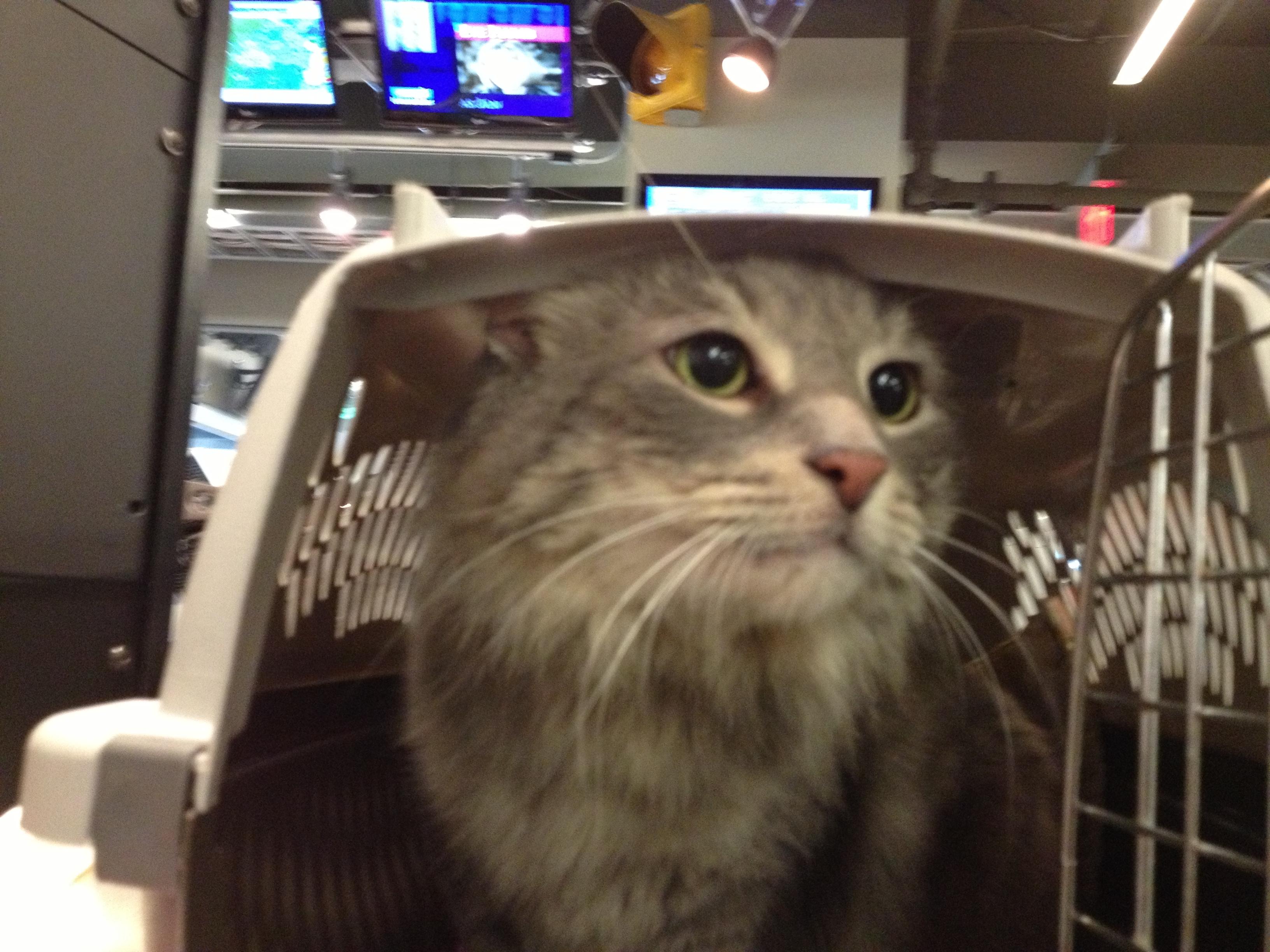 Pet of the Week: Aida