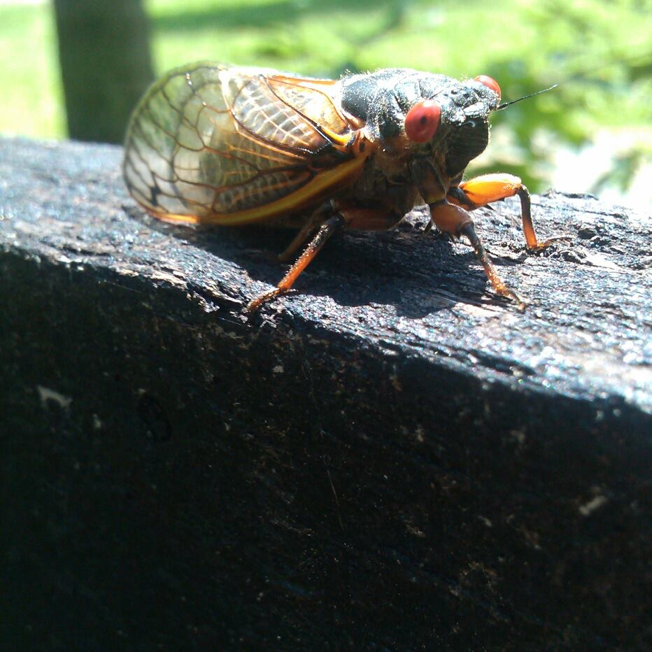 Cicadas, pollen and other summertime car killers