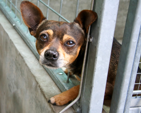 Local animal shelters take creative steps to avoid overcrowding