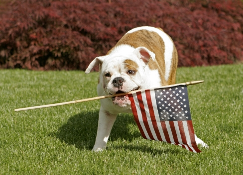 Dr. Pawz: Keep your pet home for the 4th of July