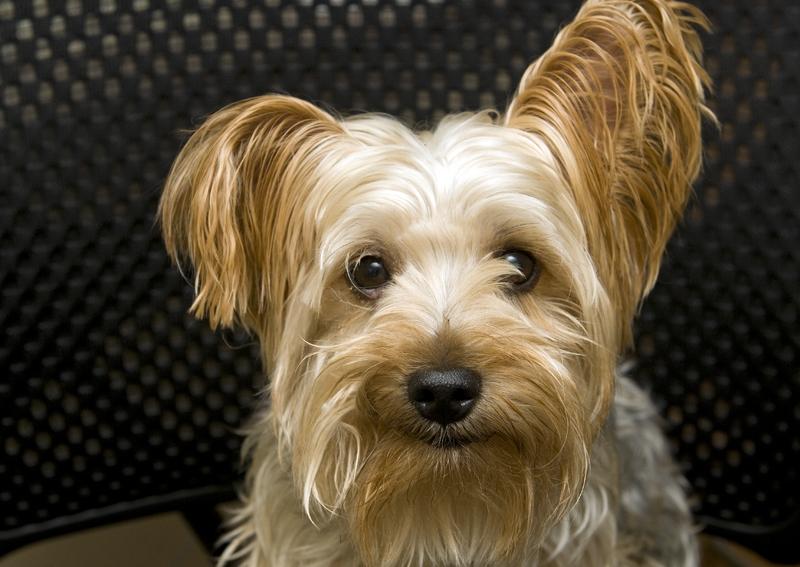 Pet of the Week: Aubrey