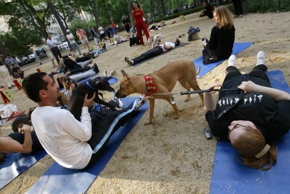 Happy hour, yoga: 5 D.C. activities to do with your dog