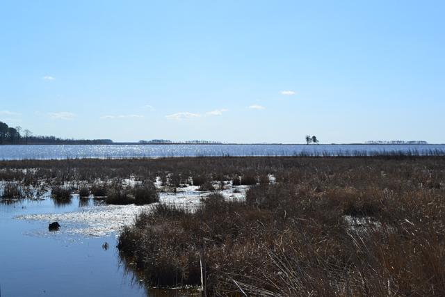Water may wipe away trail Tubman blazed, Blackwater refuge