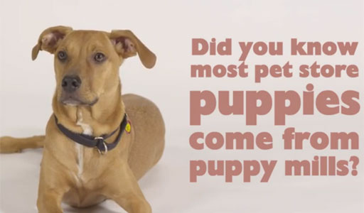 Dr. Pawz: Recognizing a puppy mill