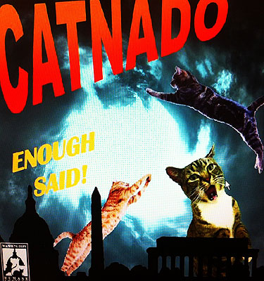 Humane Society pushes last day of 'Catnado' campaign