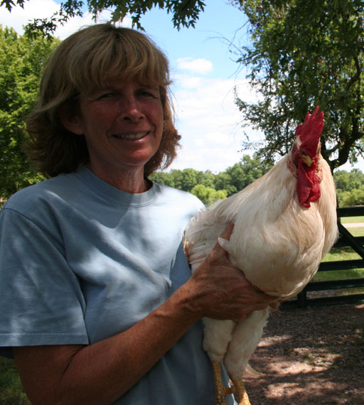 Kicked from the coop: Urban farmers ditching chickens