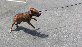 Pit bull bites 2 children, owner arrested