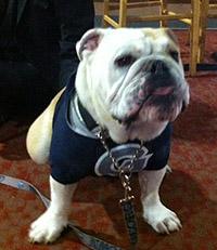 Georgetown bulldog mascot's reign short-lived