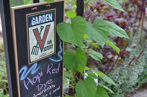 Celebrating the American food experience in a garden