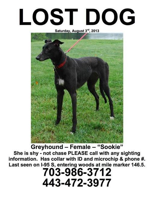Missing greyhound last seen on I-95