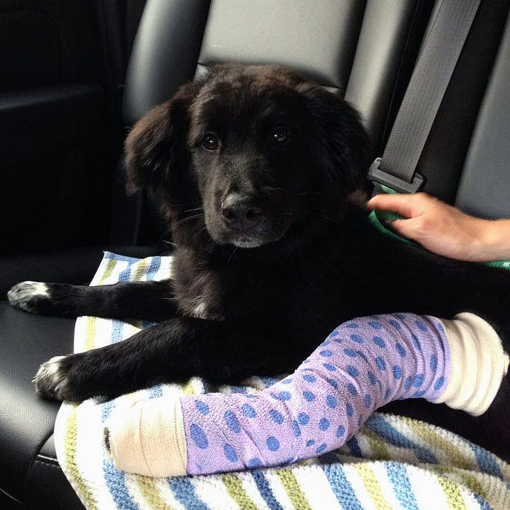 Puppy recovers after reportedly thrown from second story